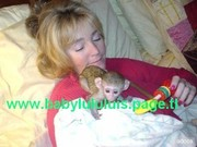 LOVELY BABY FACE CAPUCHIN MONKEYS FOR ADOPTION